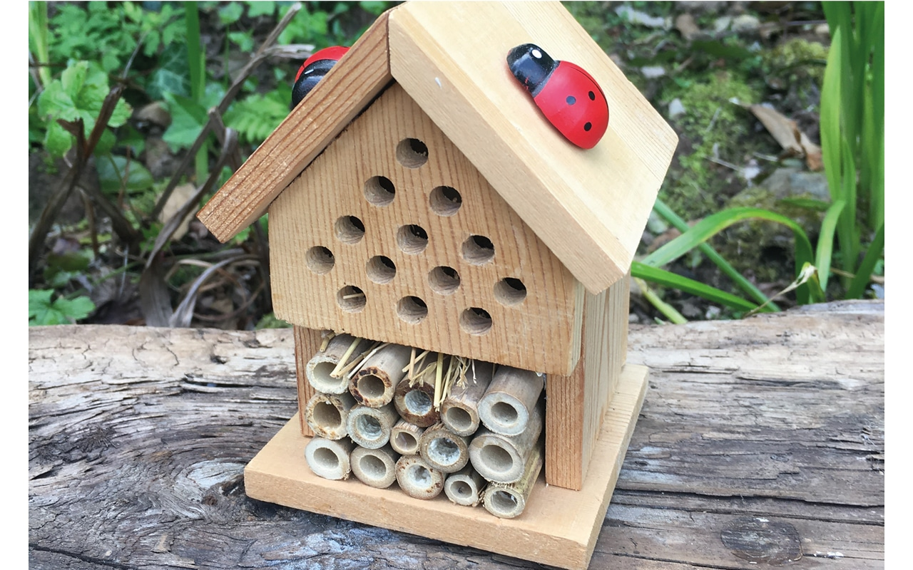 Insect-House-Kit
