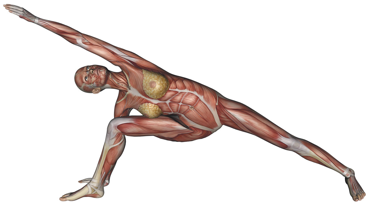 Extended Side Angle Pose - Yoga Anatomy