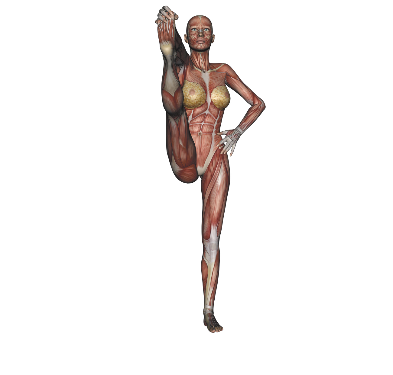 Standing big-toe hold pose - Yoga anatomy