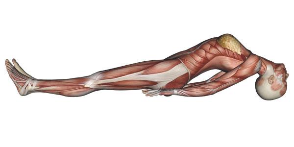 Fish Pose Yoga Anatomy