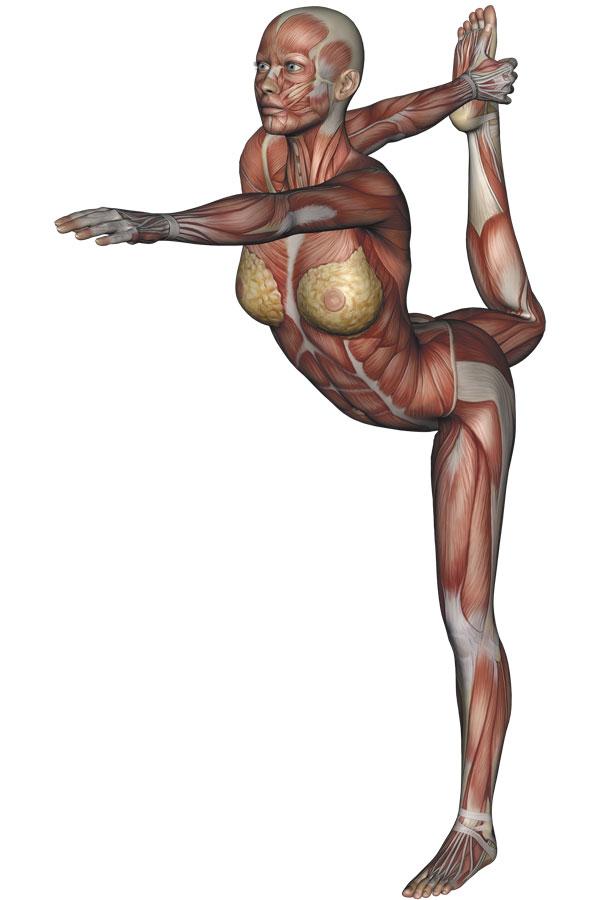 Dancer Pose Yoga Anatomy