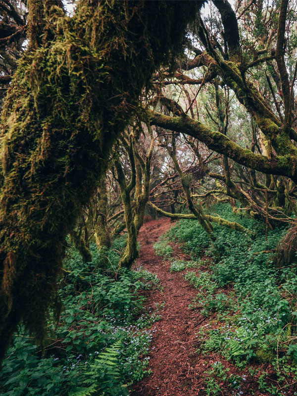 forest bathing - Yoga Travel