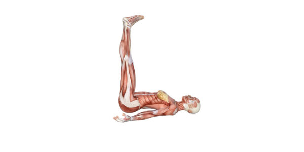 Legs up the wall pose Yoga Anatomy