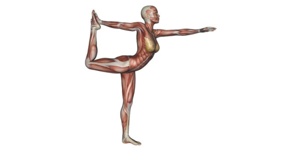 Dancer Pose Yoga Anatomy