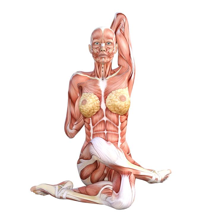 Cow Head Pose – Yoga Anatomy