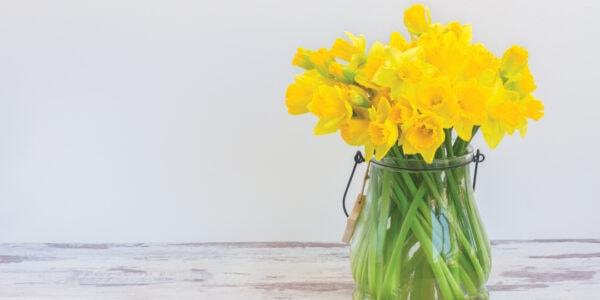 Springtime health MOT