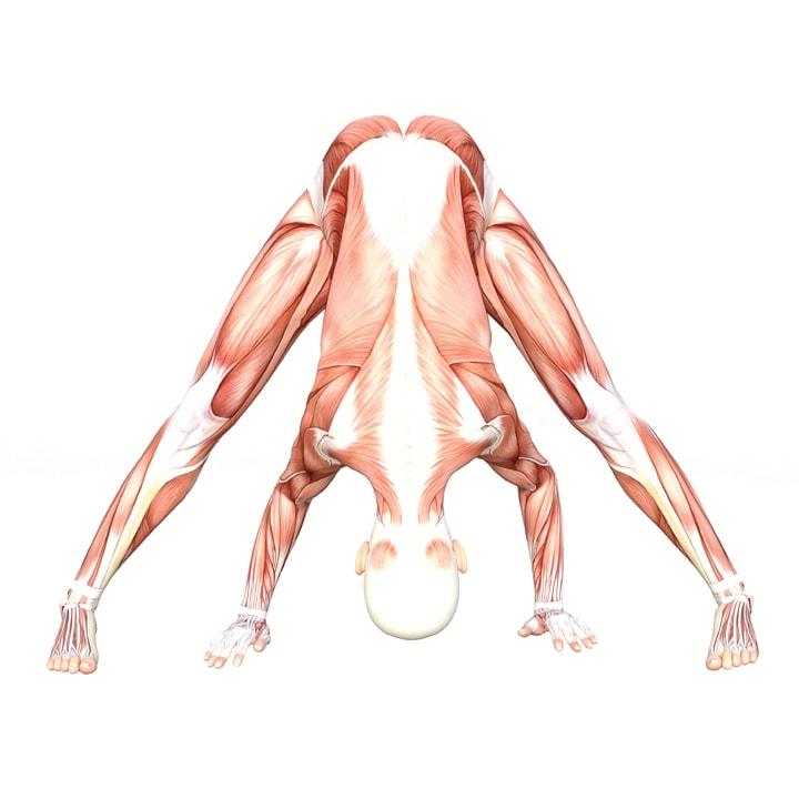 Wide-legged Standing Forward Bend