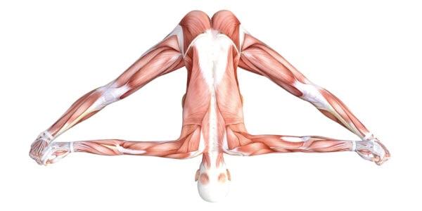 Wide-Legged Seated Forward Bend Pose