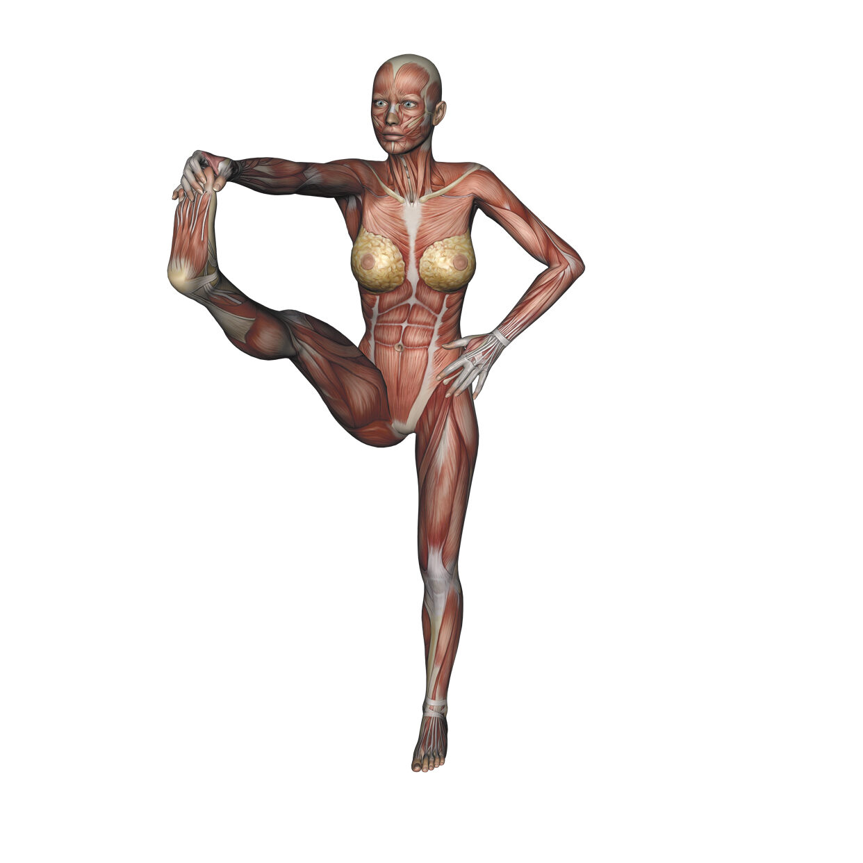 Standing big-toe hold pose Yoga anatomy