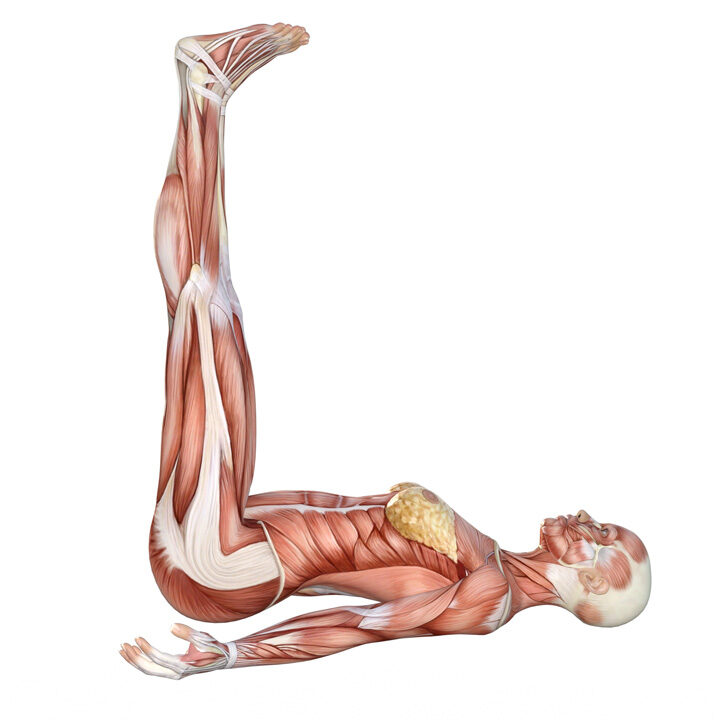 Yoga Anatomy Legs Up The Wall Pose