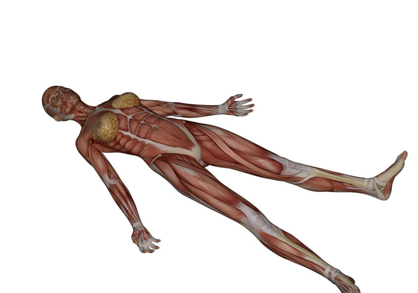 Corpse Pose Yoga Anatomy